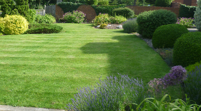 Mint Green Gardens - Leamington Spa Gardner - Your garden can be lovely. Trimmed & nicely planted. We love what we do to make gardens lovely. Either a clear-up/new start to regular care & planned development. Do phone anytime. at Mint Green Gardens